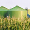 Green biogas biomass silos in corn field