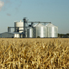 Corn field with ethanol plant in distance